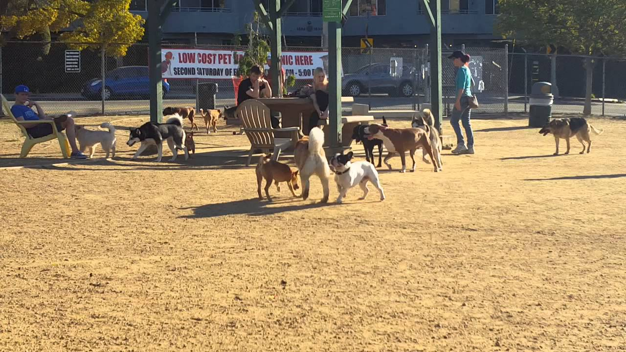 Best dog parks in los angeles