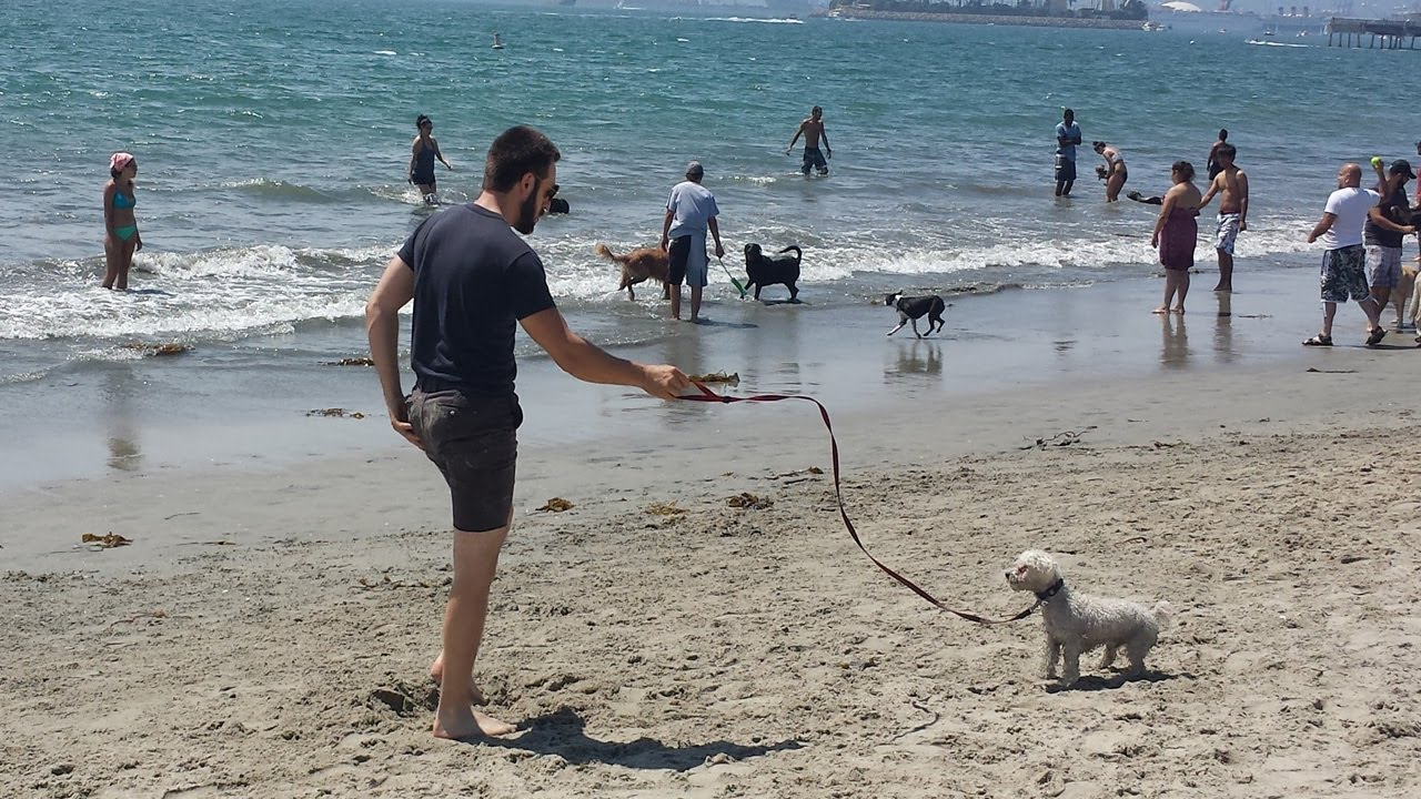 Best Off Leash Dog Beaches In Los Angeles