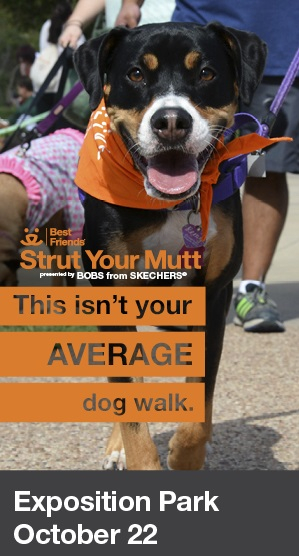 STRUT YOUR MUTT - Save Them All | DTLA Events | Top DTLA Realtor