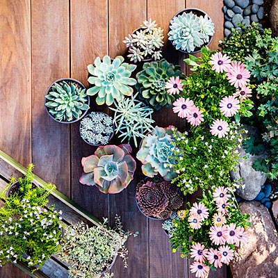 Best succulent garden in containers ideas | Los Feliz Real Estate | Los Feliz Houses For Sale