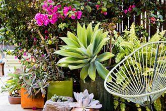 Best succulent garden in containers ideas | Los Feliz Homes For Sale | Los Feliz Real Estate Company