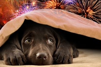10 Tips to Keep Our Pets Safe this July 4th | Glenn Shelhamer Real Estate Agent | Silver Lake Homes For Sale